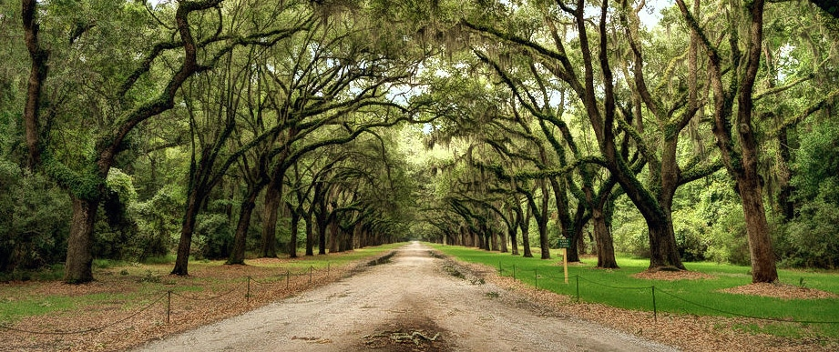 Things to do in Savannah: Explore Isle of Hope and Sandfly